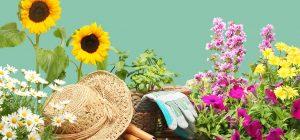 Mailchimp logo Wednesday Wellness Guide: Toolally in The Garden