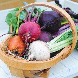 wellness guide seeds